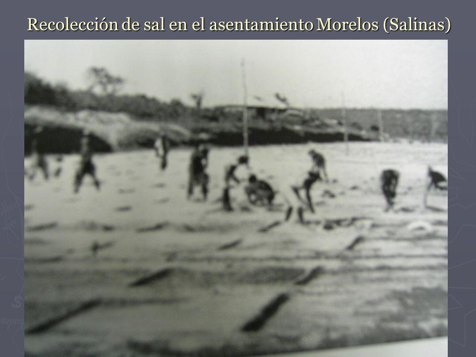 Recolección de sal en el asentamiento Morelos (Salinas)