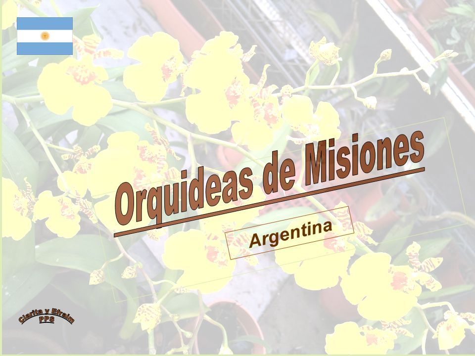 Orquideas de Misiones Argentina Clarita y Efraim PPS