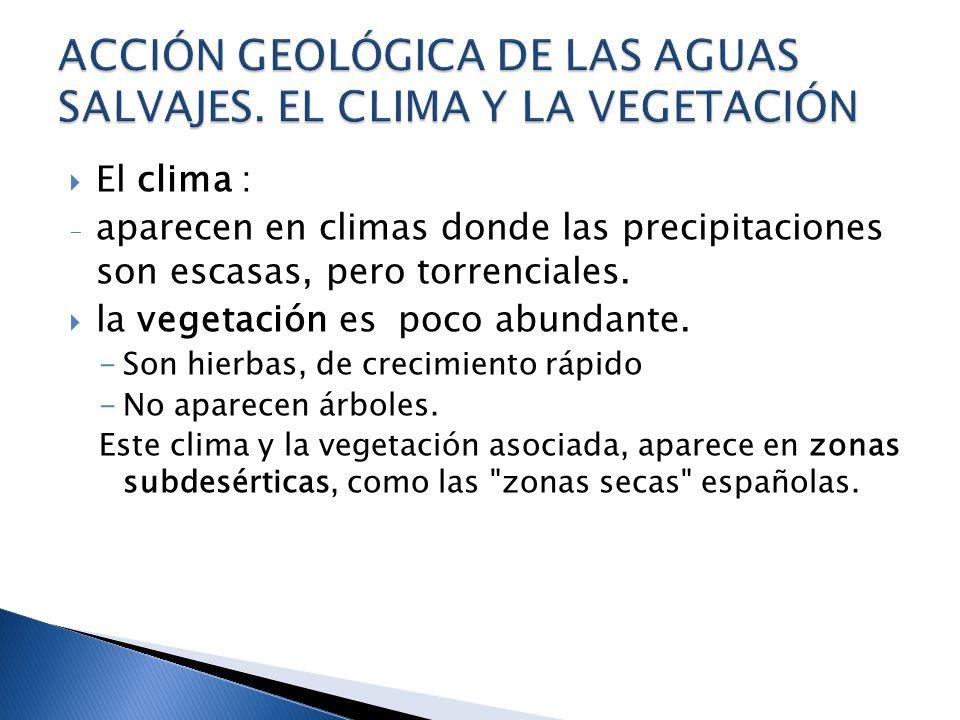 ACCIÓN GEOLÓGICA DE LAS AGUAS SALVAJES. EL CLIMA Y LA VEGETACIÓN