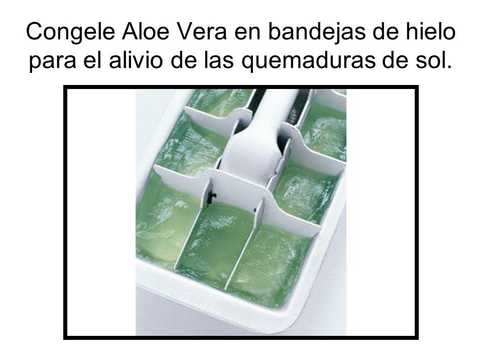 Congele Aloe Vera en bandejas de hielo para el alivio de las quemaduras de sol.