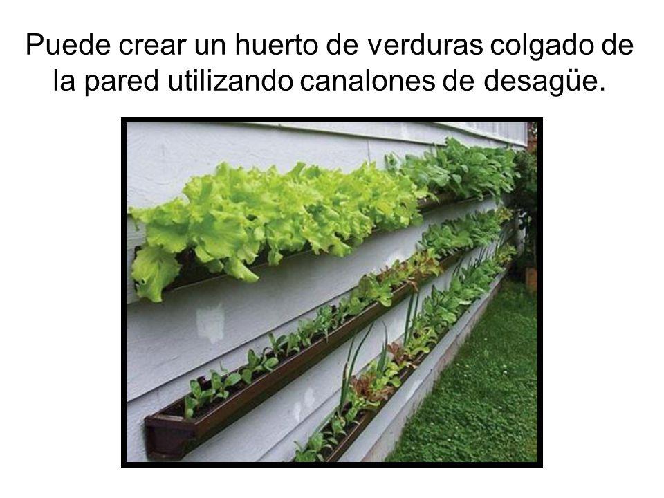 Puede crear un huerto de verduras colgado de la pared utilizando canalones de desagüe.