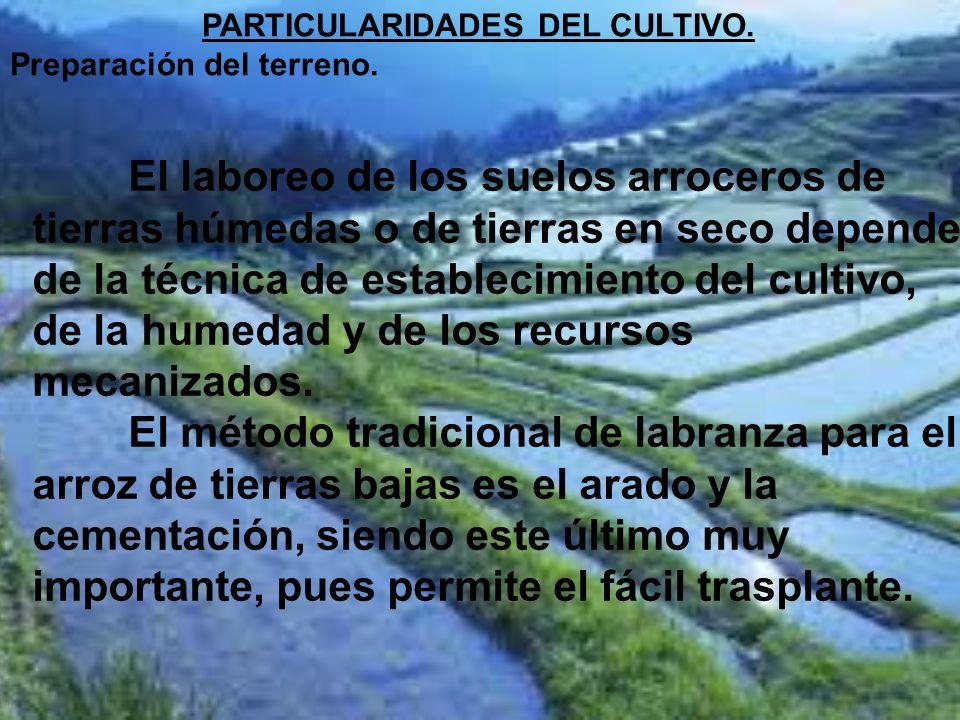 PARTICULARIDADES DEL CULTIVO.