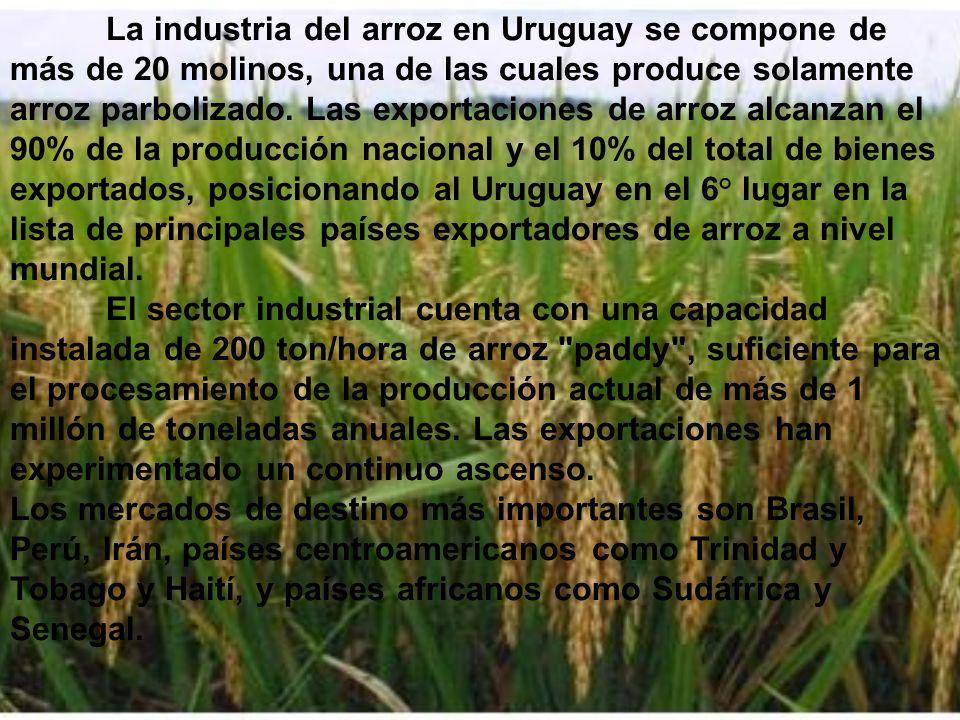 La industria del arroz en Uruguay se compone de más de 20 molinos, una de las cuales produce solamente arroz parbolizado. Las exportaciones de arroz alcanzan el 90% de la producción nacional y el 10% del total de bienes exportados, posicionando al Uruguay en el 6° lugar en la lista de principales países exportadores de arroz a nivel mundial. El sector industrial cuenta con una capacidad instalada de 200 ton/hora de arroz paddy , suficiente para el procesamiento de la producción actual de más de 1 millón de toneladas anuales. Las exportaciones han experimentado un continuo ascenso.