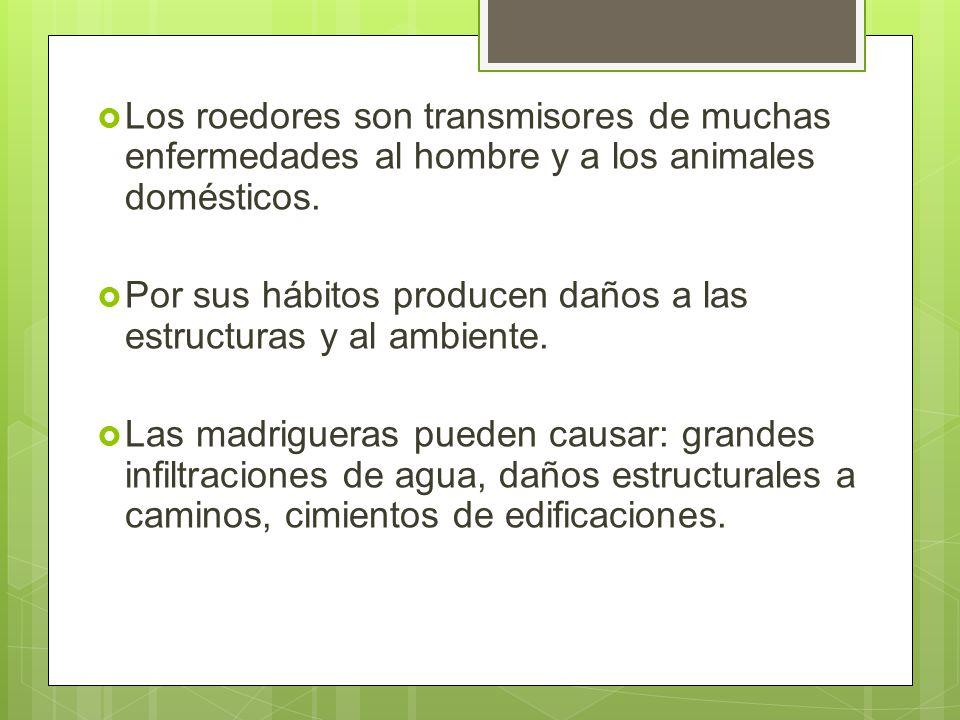Los roedores son transmisores de muchas enfermedades al hombre y a los animales domésticos.