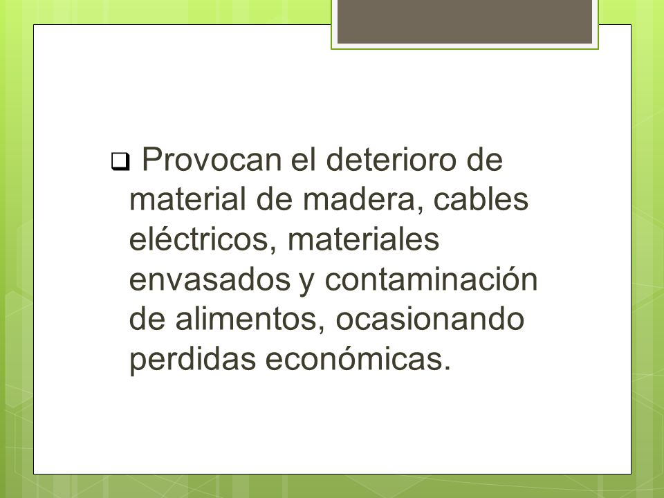 Provocan el deterioro de material de madera, cables eléctricos, materiales envasados y contaminación de alimentos, ocasionando perdidas económicas.