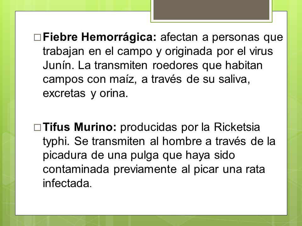 Fiebre Hemorrágica: afectan a personas que trabajan en el campo y originada por el virus Junín. La transmiten roedores que habitan campos con maíz, a través de su saliva, excretas y orina.