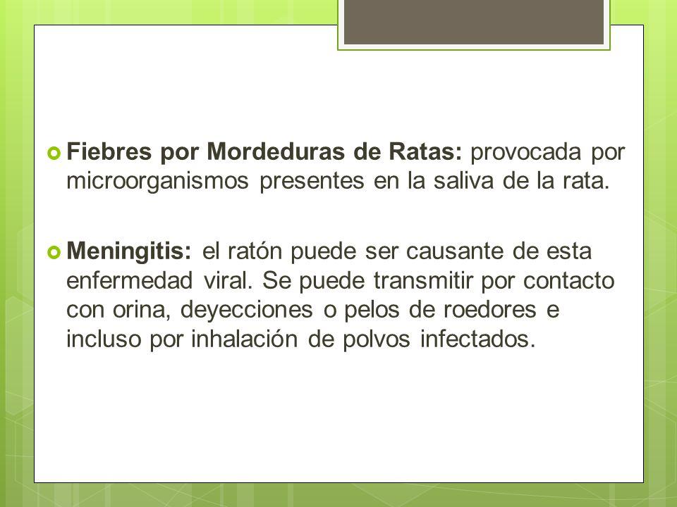 Fiebres por Mordeduras de Ratas: provocada por microorganismos presentes en la saliva de la rata.
