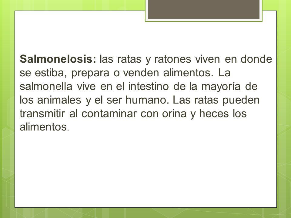 Salmonelosis: las ratas y ratones viven en donde se estiba, prepara o venden alimentos.