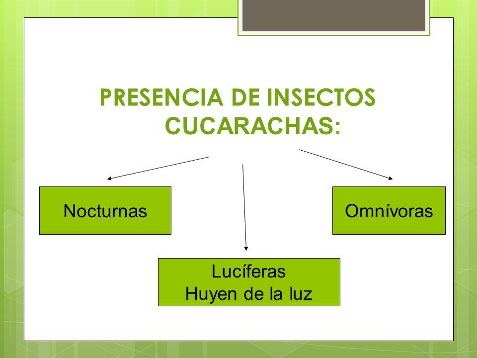 PRESENCIA DE INSECTOS CUCARACHAS: Nocturnas Omnívoras Lucíferas