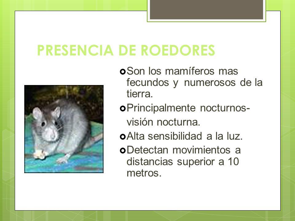 PRESENCIA DE ROEDORES Son los mamíferos mas fecundos y numerosos de la tierra. Principalmente nocturnos-
