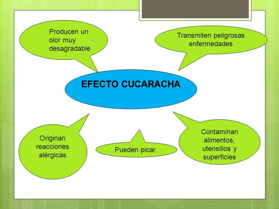 EFECTO CUCARACHA Producen un olor muy desagradable