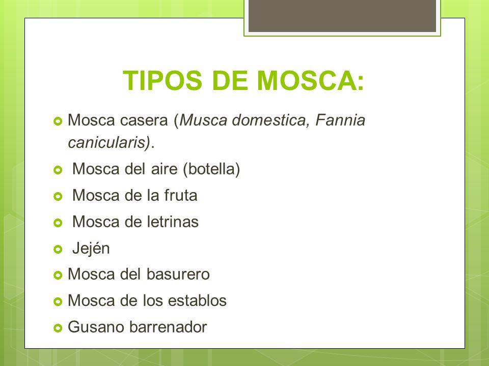 TIPOS DE MOSCA: Mosca casera (Musca domestica, Fannia canicularis).