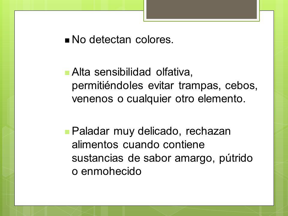 No detectan colores. Alta sensibilidad olfativa, permitiéndoles evitar trampas, cebos, venenos o cualquier otro elemento.