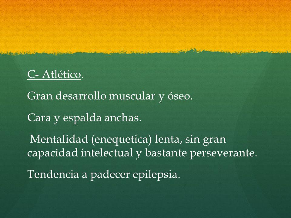 C- Atlético. Gran desarrollo muscular y óseo. Cara y espalda anchas.