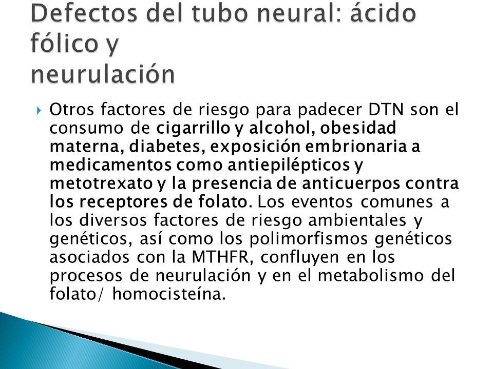 Defectos del tubo neural: ácido fólico y neurulación
