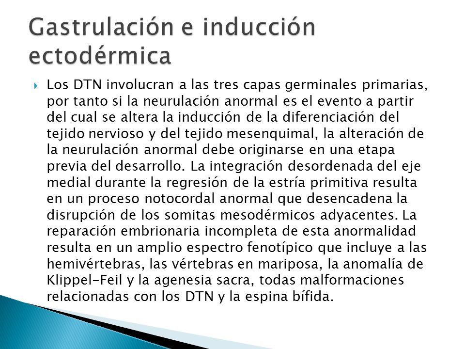 Gastrulación e inducción ectodérmica