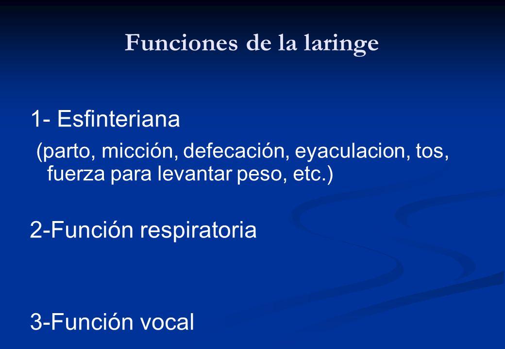 Funciones de la laringe