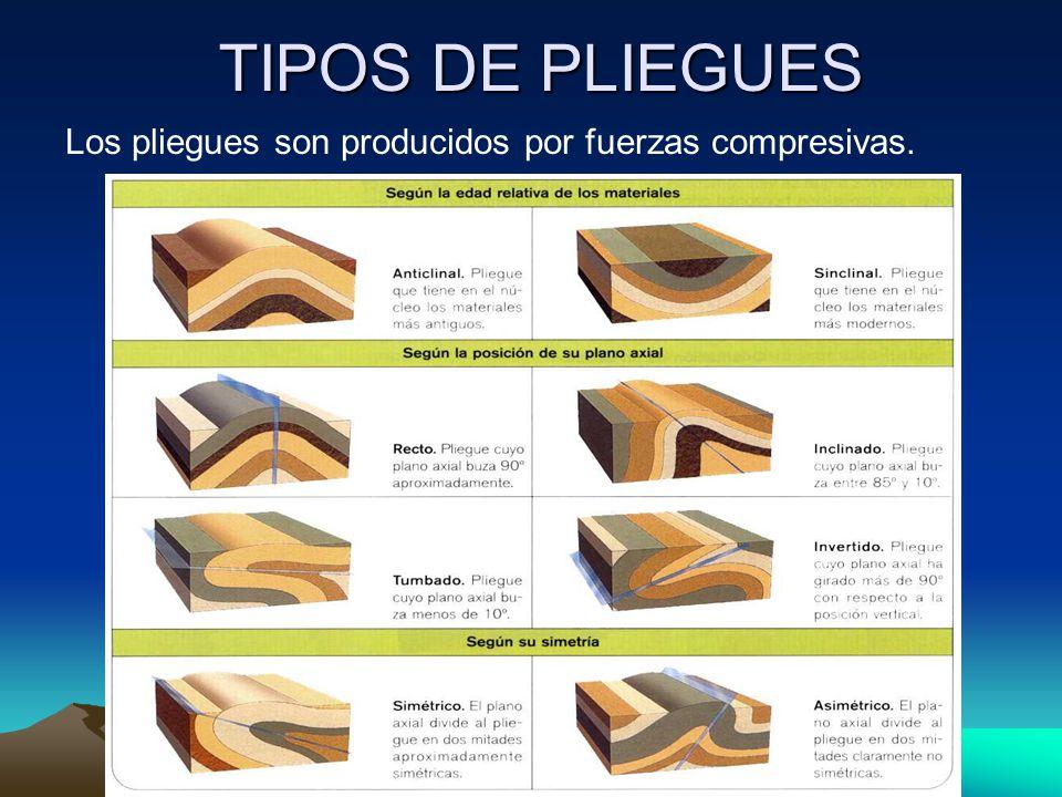 TIPOS DE PLIEGUES Los pliegues son producidos por fuerzas compresivas.