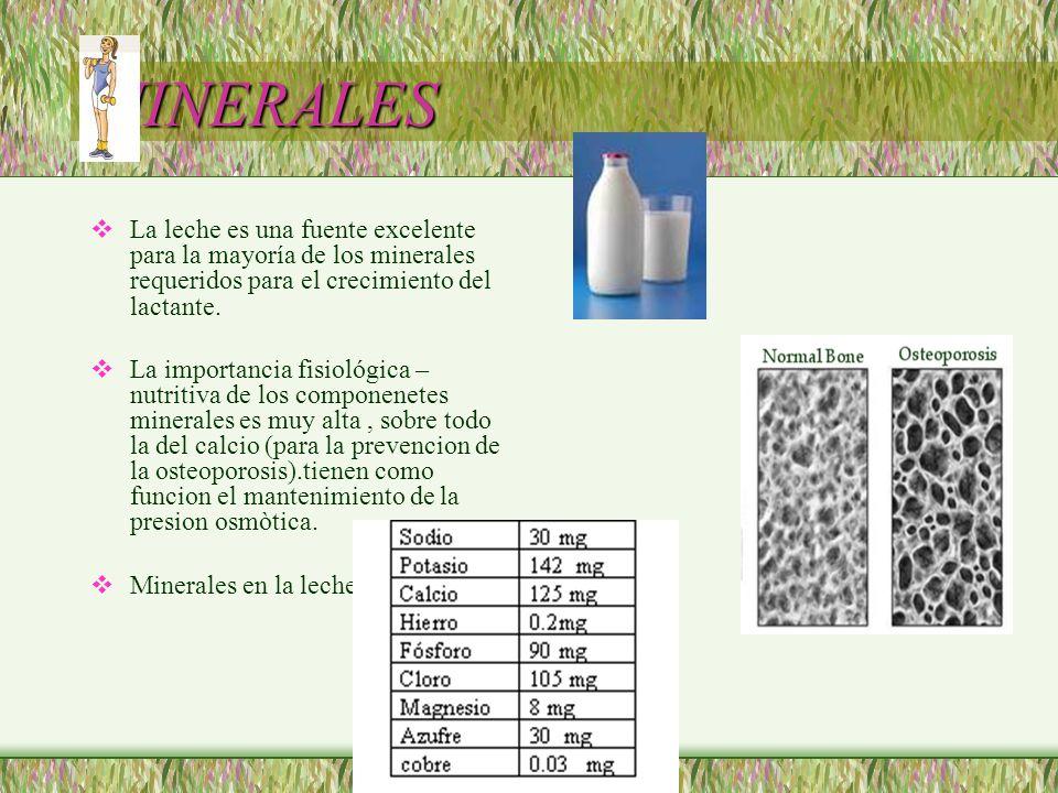 MINERALES La leche es una fuente excelente para la mayoría de los minerales requeridos para el crecimiento del lactante.