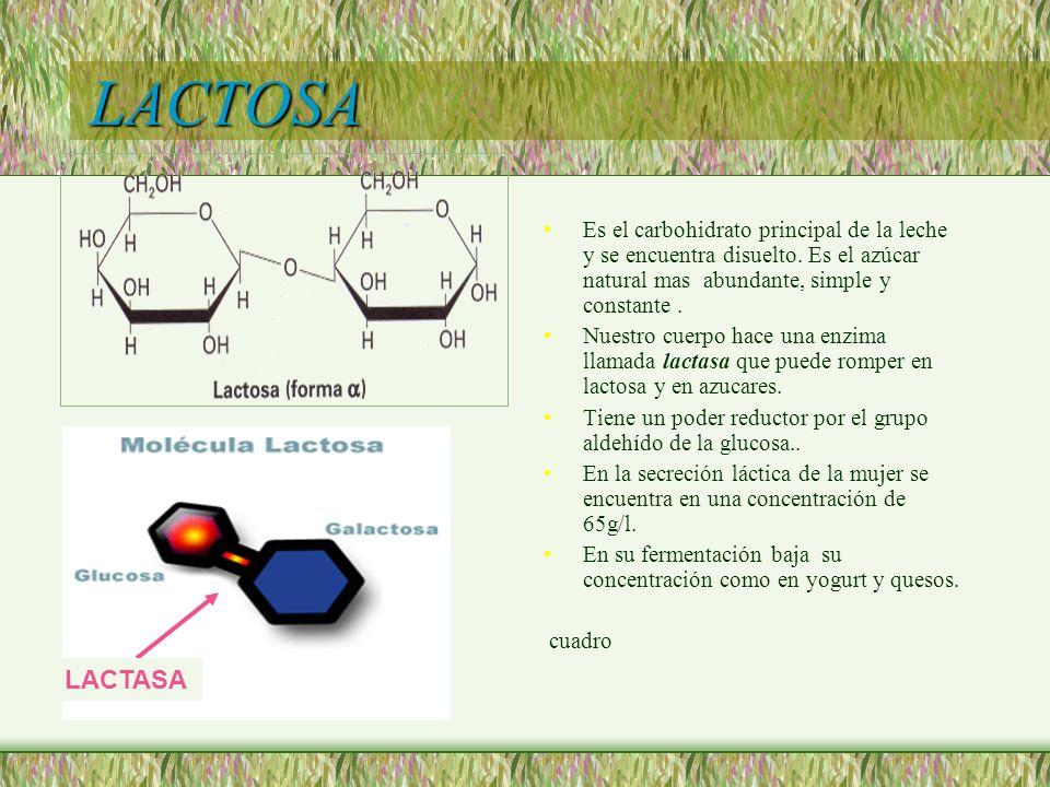 LACTOSA Es el carbohidrato principal de la leche y se encuentra disuelto. Es el azúcar natural mas abundante, simple y constante .