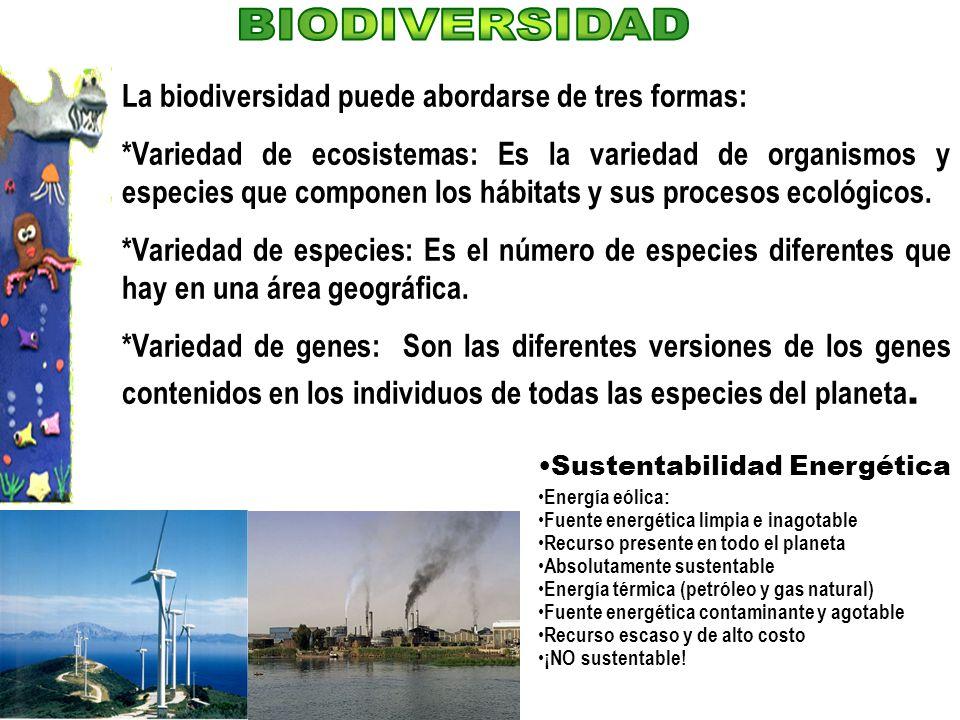 BIODIVERSIDAD La biodiversidad puede abordarse de tres formas: