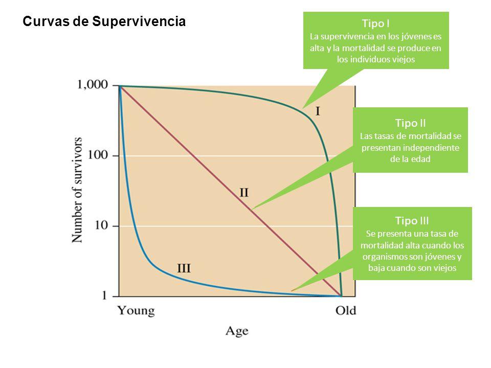 Las tasas de mortalidad se presentan independiente de la edad