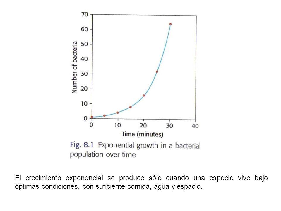 El crecimiento exponencial se produce sólo cuando una especie vive bajo óptimas condiciones, con suficiente comida, agua y espacio.
