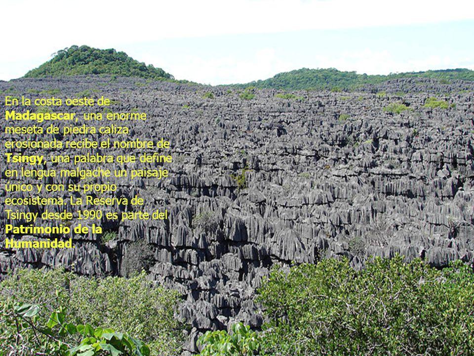 En la costa oeste de Madagascar, una enorme meseta de piedra caliza erosionada recibe el nombre de Tsingy, una palabra que define en lengua malgache un paisaje único y con su propio ecosistema.