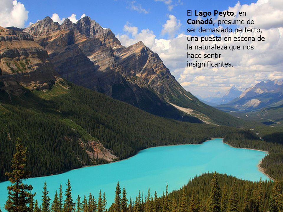 El Lago Peyto, en Canadá, presume de ser demasiado perfecto, una puesta en escena de la naturaleza que nos hace sentir insignificantes.
