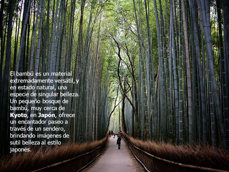 El bambú es un material extremadamente versátil, y en estado natural, una especie de singular belleza.