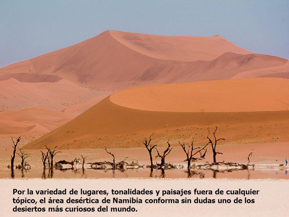 Por la variedad de lugares, tonalidades y paisajes fuera de cualquier tópico, el área desértica de Namibia conforma sin dudas uno de los desiertos más curiosos del mundo.