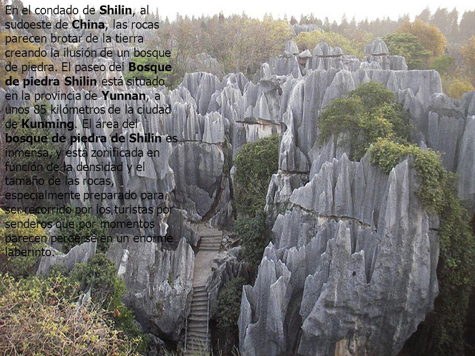 En el condado de Shilin, al sudoeste de China, las rocas parecen brotar de la tierra creando la ilusión de un bosque de piedra.