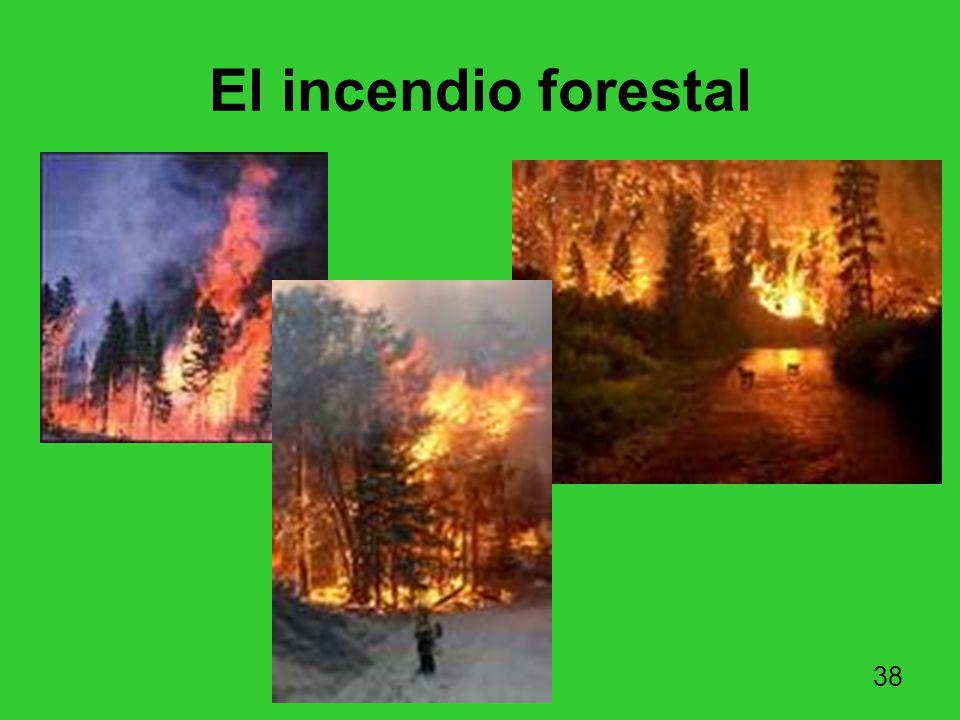 El incendio forestal