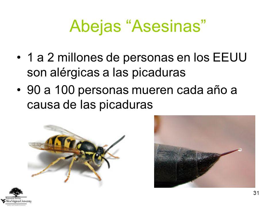 Abejas Asesinas 1 a 2 millones de personas en los EEUU son alérgicas a las picaduras. 90 a 100 personas mueren cada año a causa de las picaduras.