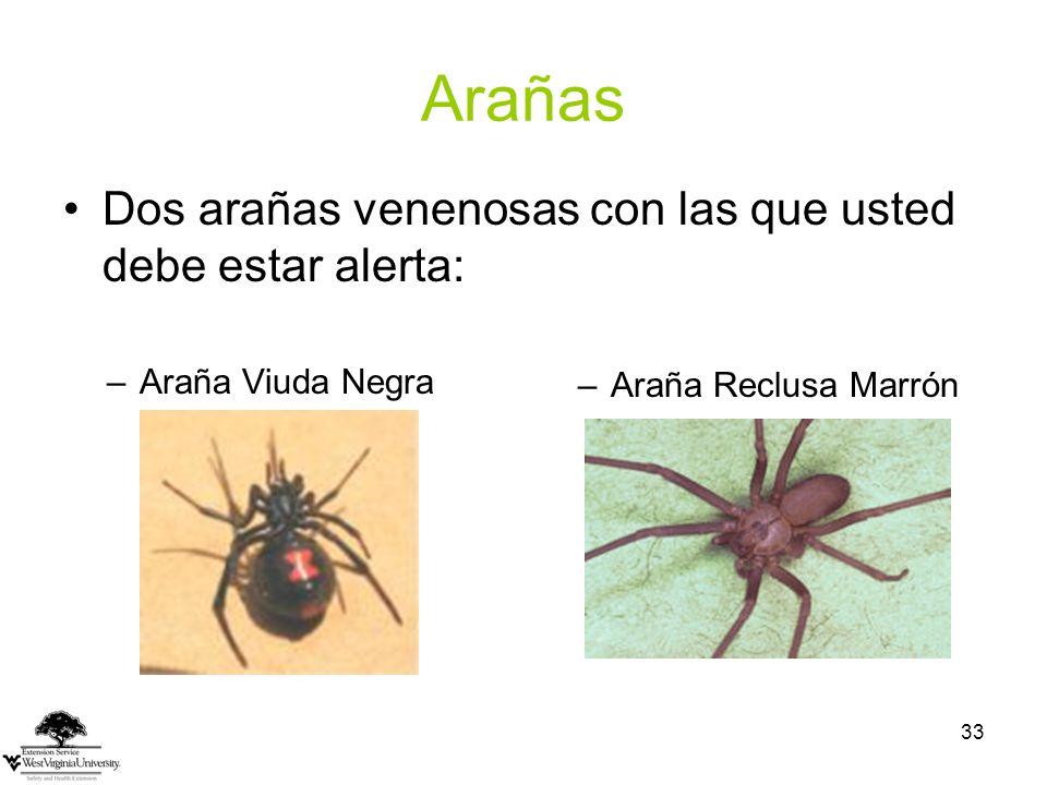 Arañas Dos arañas venenosas con las que usted debe estar alerta: