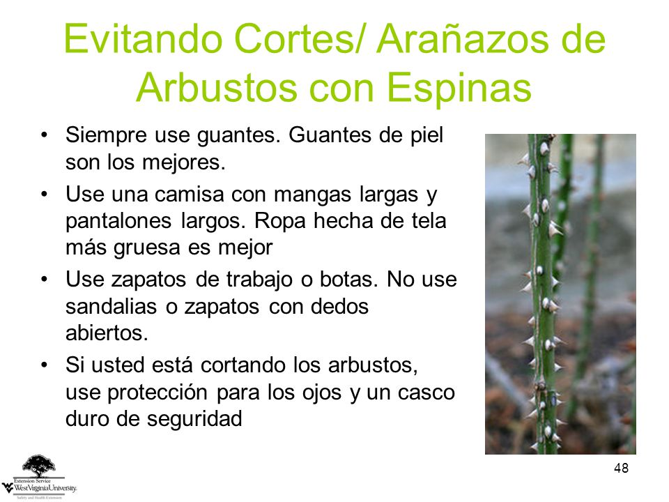 Evitando Cortes/ Arañazos de Arbustos con Espinas