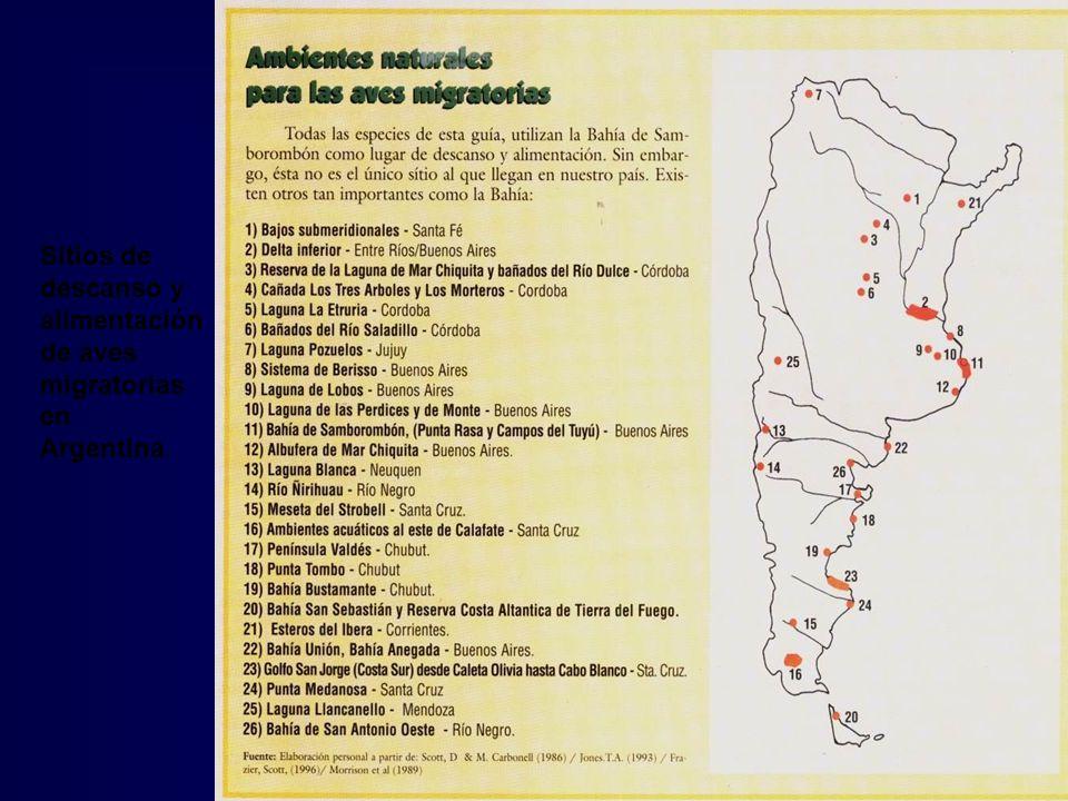 Sitios de descanso y alimentación de aves migratorias en Argentina.