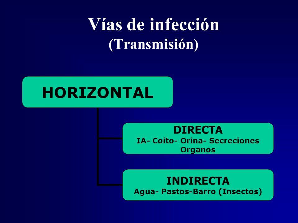 Vías de infección (Transmisión)