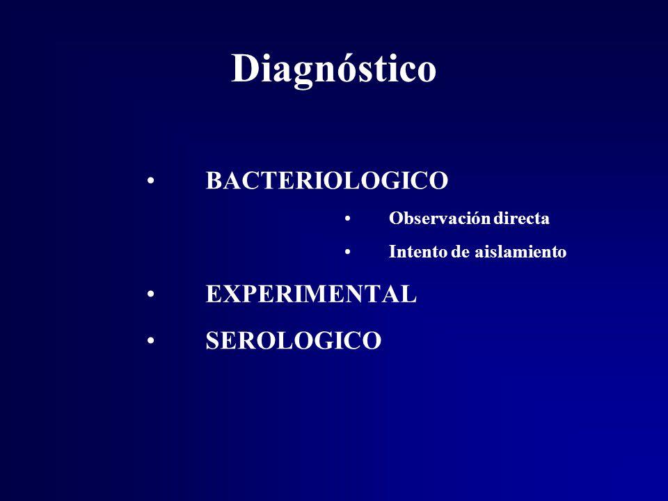 Diagnóstico BACTERIOLOGICO EXPERIMENTAL SEROLOGICO Observación directa