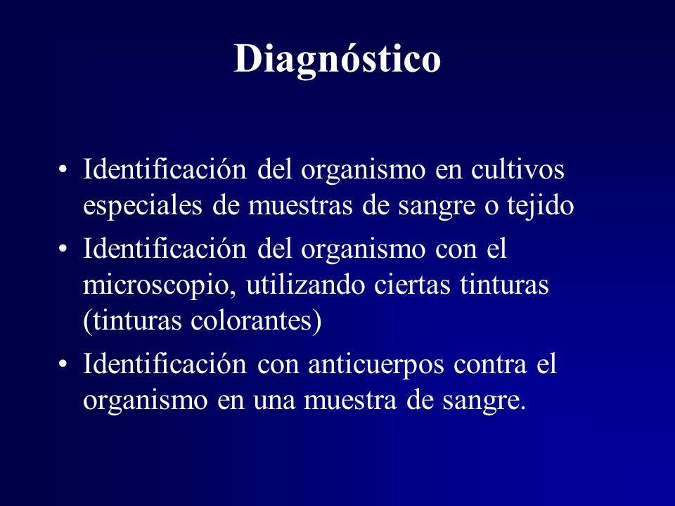 Diagnóstico Identificación del organismo en cultivos especiales de muestras de sangre o tejido.