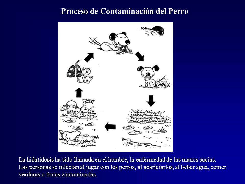 Proceso de Contaminación del Perro