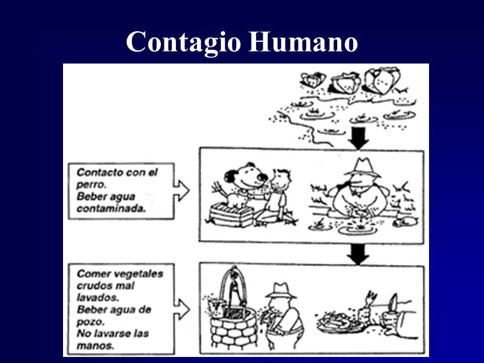 Contagio Humano