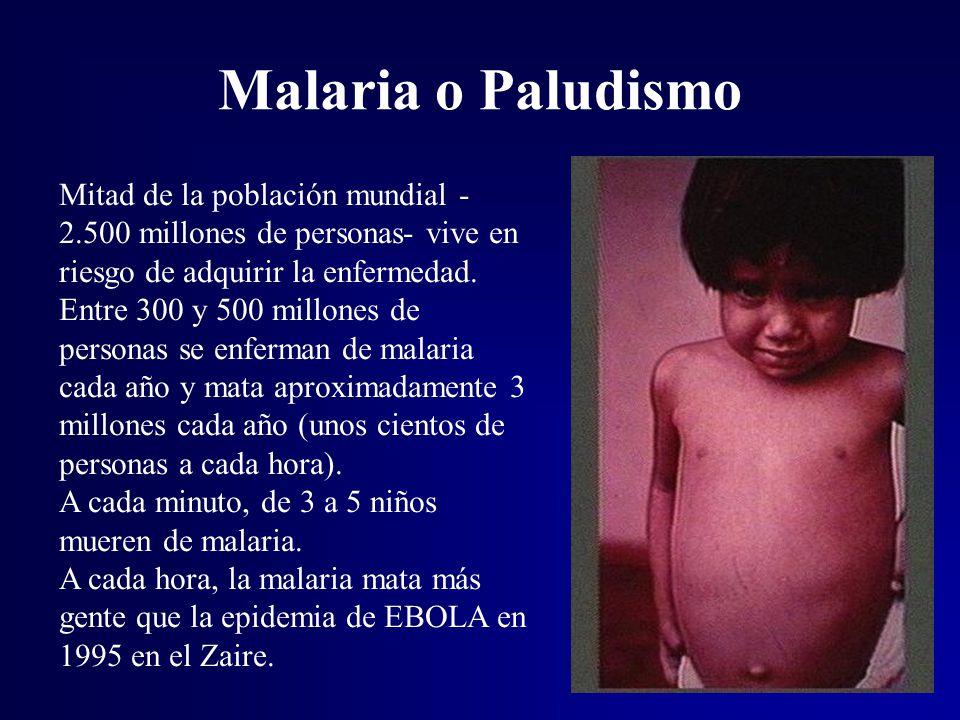 Malaria o Paludismo Mitad de la población mundial -2.500 millones de personas- vive en riesgo de adquirir la enfermedad.