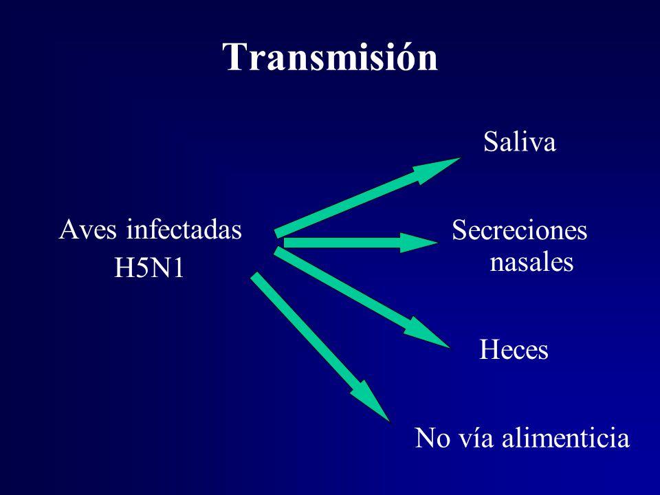 Transmisión Saliva Aves infectadas Secreciones nasales H5N1 Heces