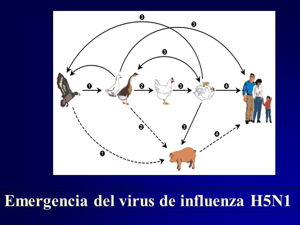 Emergencia del virus de influenza H5N1