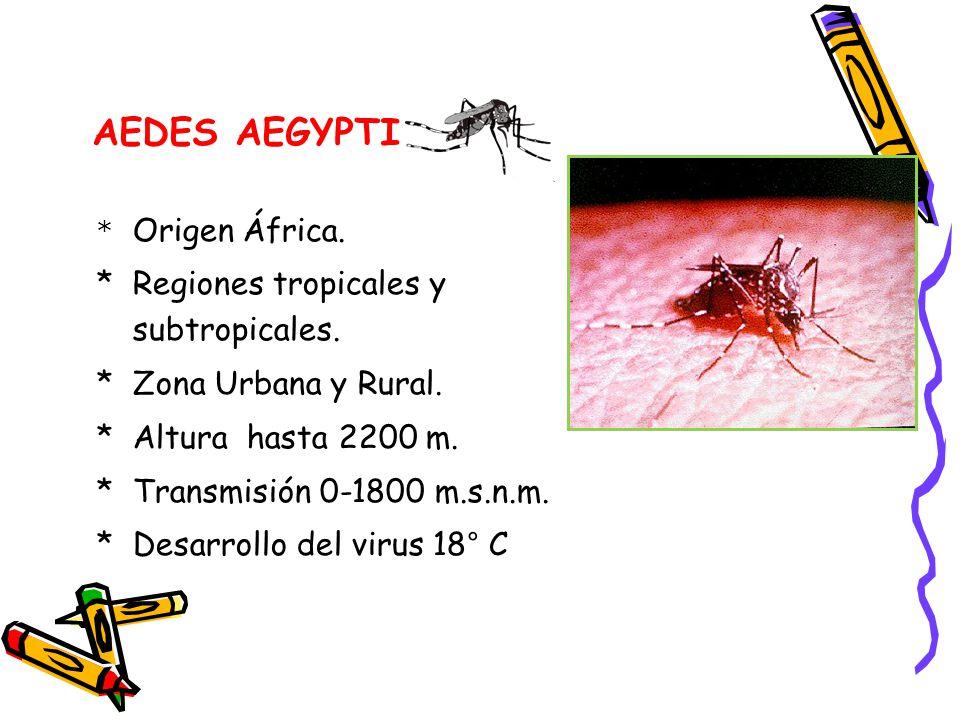 AEDES AEGYPTI * Regiones tropicales y subtropicales.