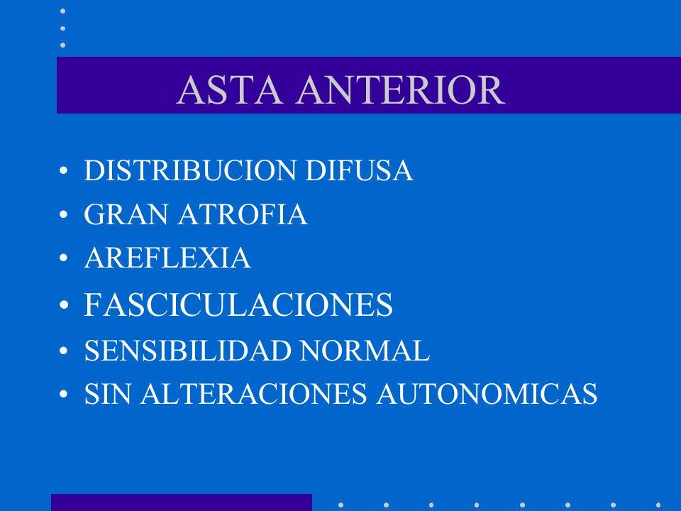 ASTA ANTERIOR FASCICULACIONES DISTRIBUCION DIFUSA GRAN ATROFIA
