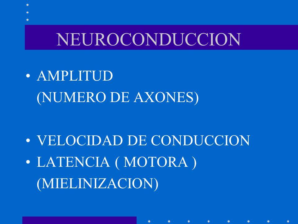 NEUROCONDUCCION AMPLITUD (NUMERO DE AXONES) VELOCIDAD DE CONDUCCION