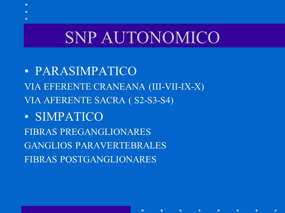 SNP AUTONOMICO PARASIMPATICO SIMPATICO