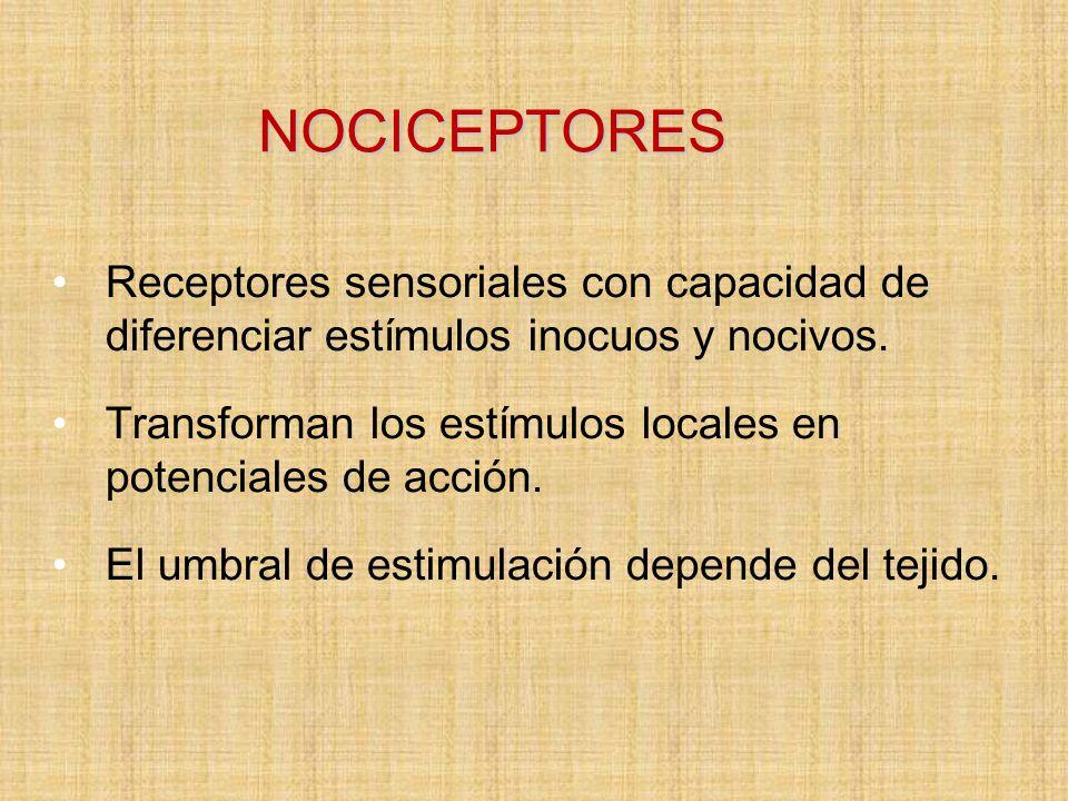 NOCICEPTORES Receptores sensoriales con capacidad de diferenciar estímulos inocuos y nocivos.